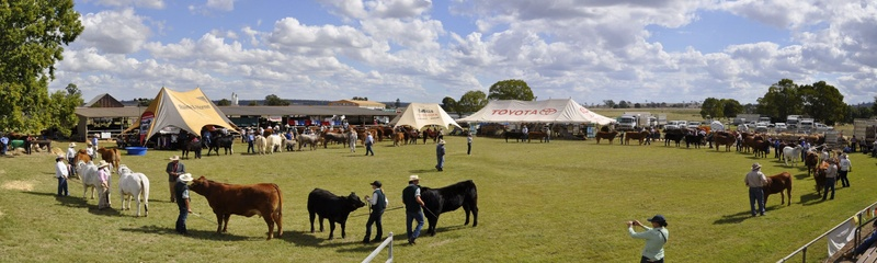 Kingaroy Limousin Feature Show 2010